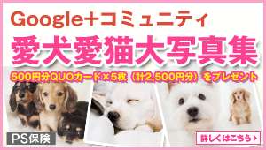 Google+コミュニティ愛犬愛猫大写真集